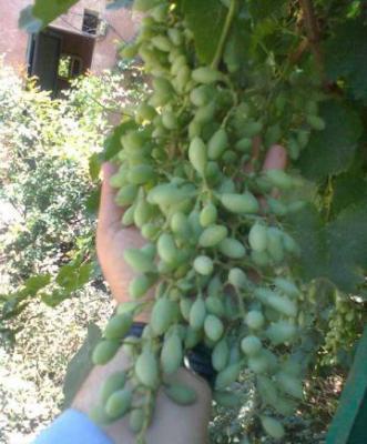 Sour Grapes (11)