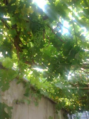Sour Grapes (8)