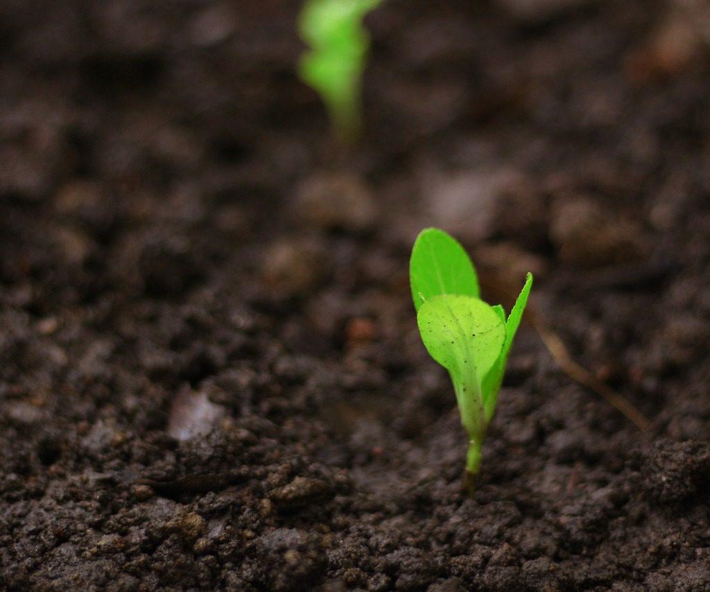 بذر، باغبانی، رشد، گیاه، کشاورزی، کود